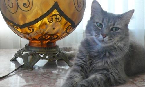 Trusted House Sitters: unisce la voglia di viaggiare allamore per gli animali domestici. Fonte: pagina Facebook Trusted House Sitters