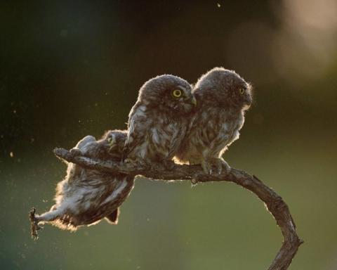 Comedy Wildlife Photography Awards (fonte: comedywildlifephoto.com)