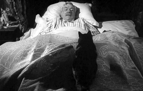"Gatti al Torino Film Festival: The Shadow of the Cat"" (1961)"