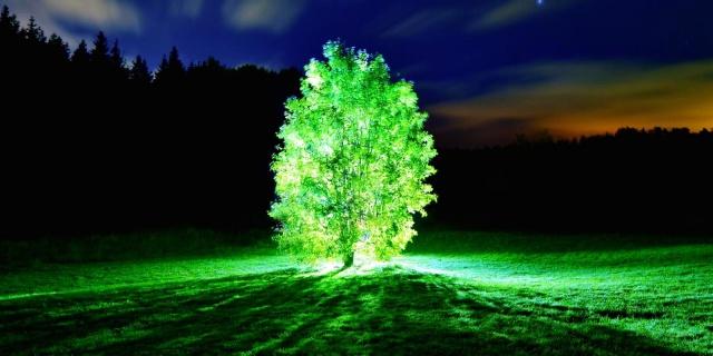 albero bioluminescente