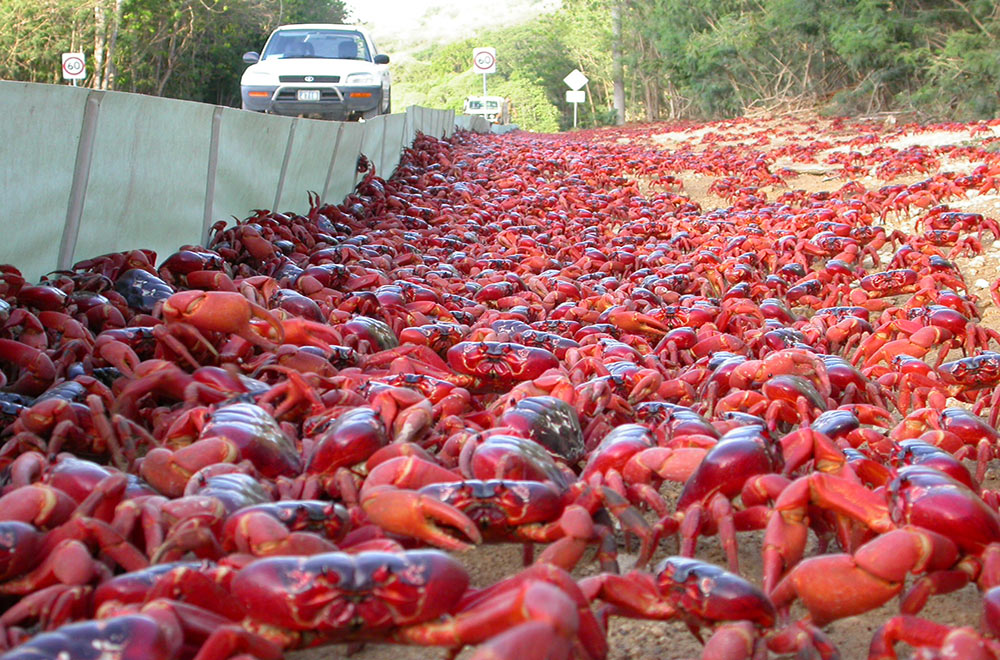 Crab barriers Max Orchard