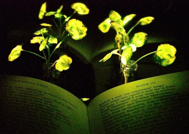 lettura con luce naturale
