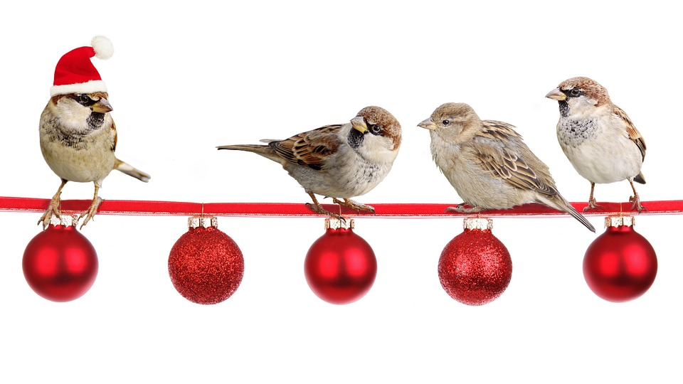 Natale 2017: gli auguri della Redazione di eHabitat