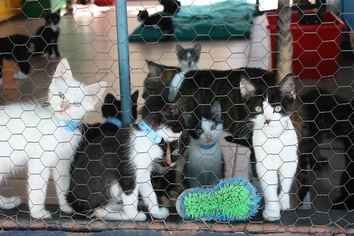regali di natale gattile