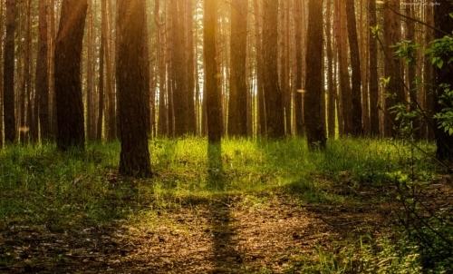 Forest For Future: in sinergia con enti pubblici e privati mira alla conservazione del patrimonio ambientale attraverso una maggiore sostenibilità della filiera produttiva.