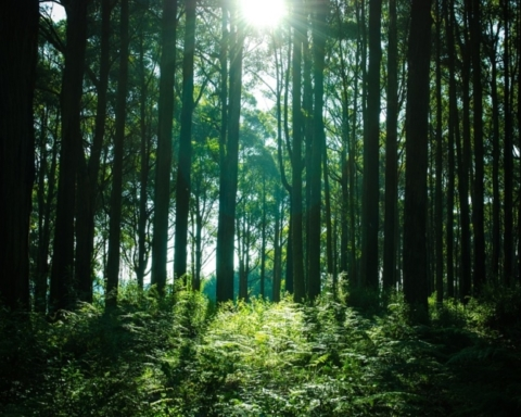 Forest For Future