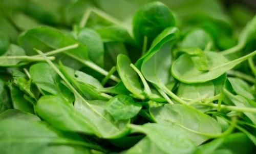 """Antinutrienti: gli spinaci sono considerati alimenti """"decalcificanti"""" per lelevato contenuto di acido ossalico."""