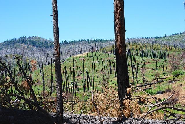 foresta incendiata