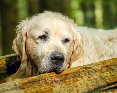 protezione civile soccorso cane