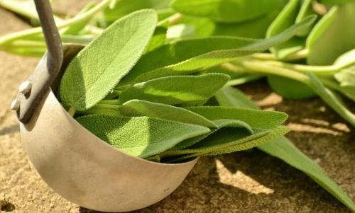 Salvia: le foglie sono usate sia fresche che essiccate per insaporire le pietanze.