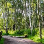 Foresta di Sharwood