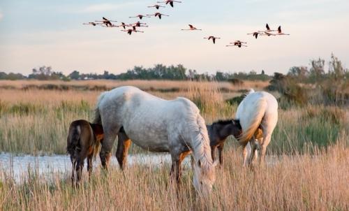 Delta del Po in bici: nella parte ferrarese del Delta si possono ammirare gli splendidi cavalli della Camargue.