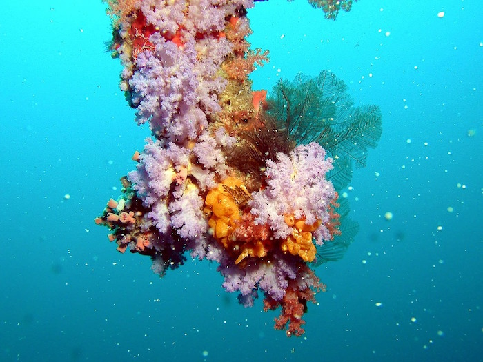 barriere coralline corallo colori bianco