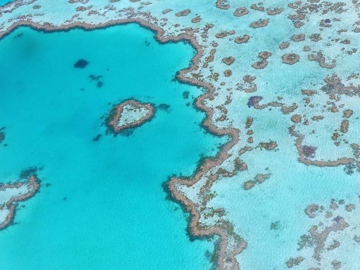barriere coralline grande barriera corallina reef