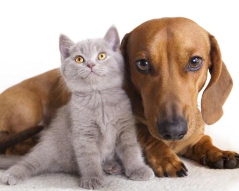 Cani e gatti (fonte: pourfemme.it)