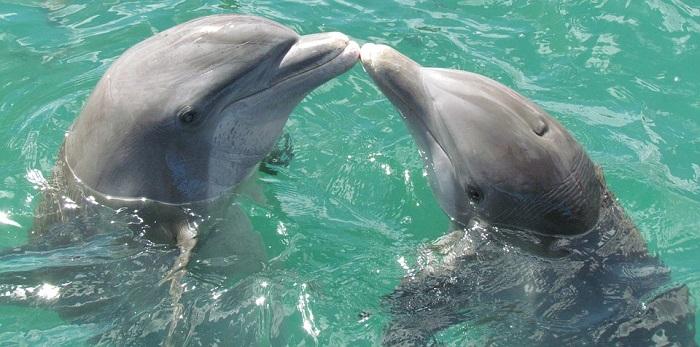 I delfini sono riconosciuti come romantici per eccellenza