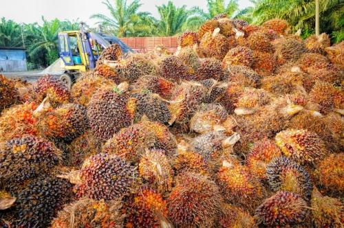 Frutto della palma