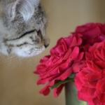 san valentino gatto fiore