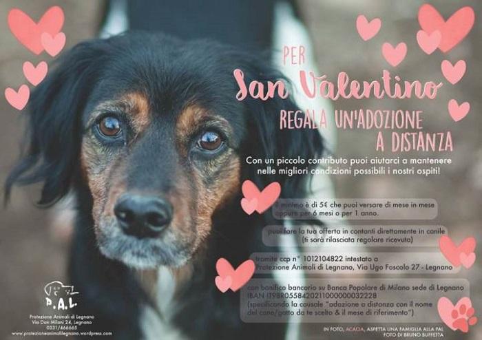 La cartolina promozionale della Protezione Animali Legnano Onlus