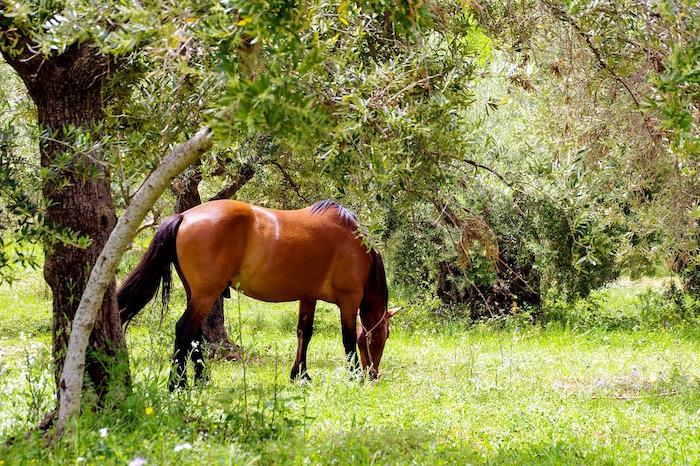 basilicata coast to coast parco pollino cavallo