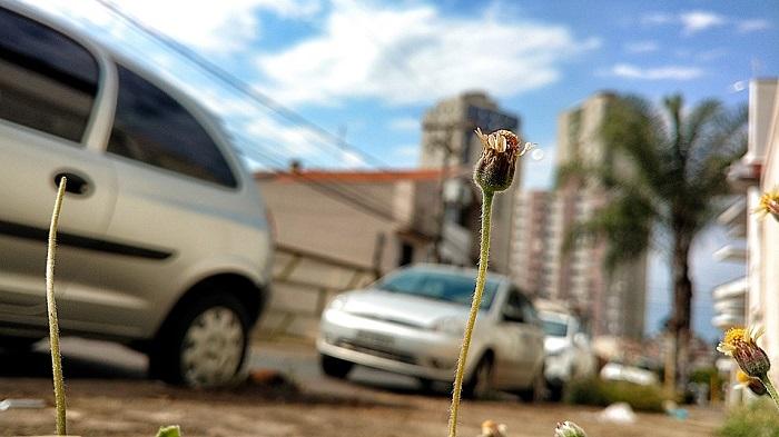 I fiori donano speranza e sono simbolo di rinascita