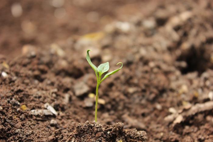 consumo di suolo terra