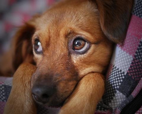 Diritti degli animali domestici