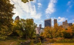 """Giornata Internazionale delle Foreste 2018: ha come tema """"Foreste e città sostenibili"""" per riflettere sullimportanza degli alberi nei contesti urbani."""