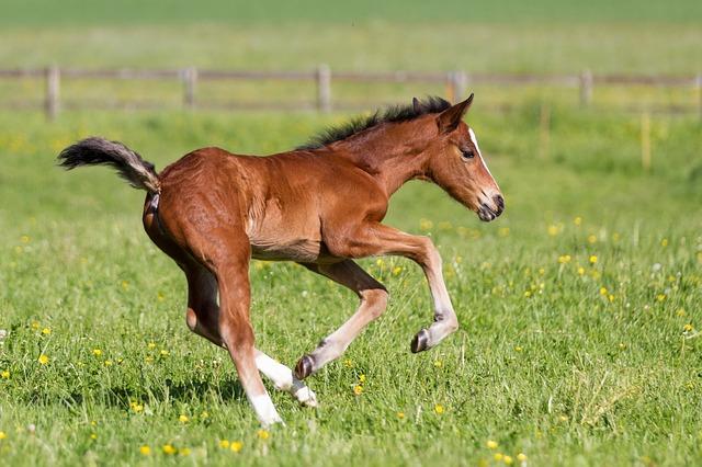 cavallo-natura