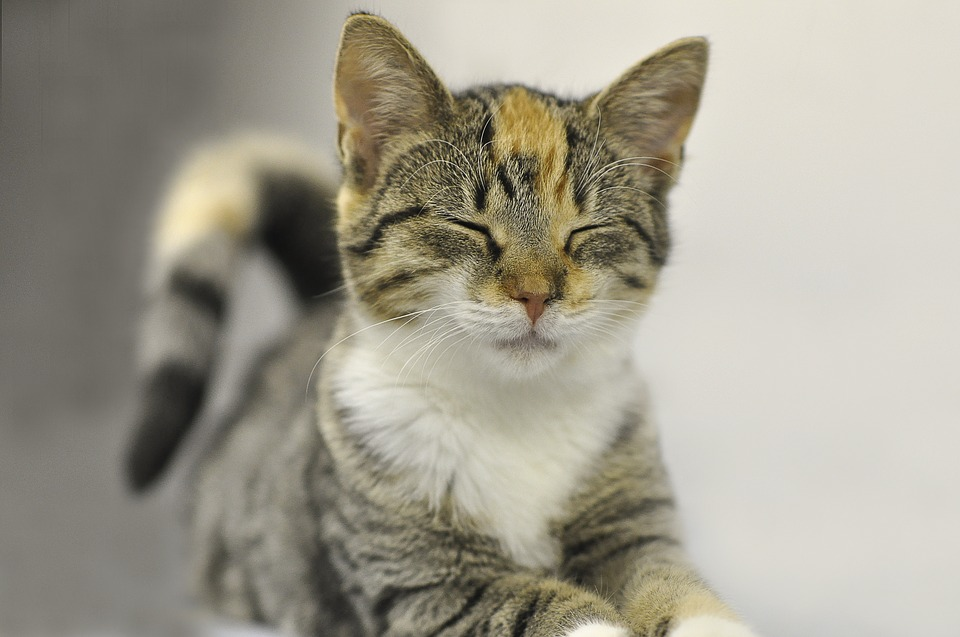LAV: tutela dei diritti degli animali