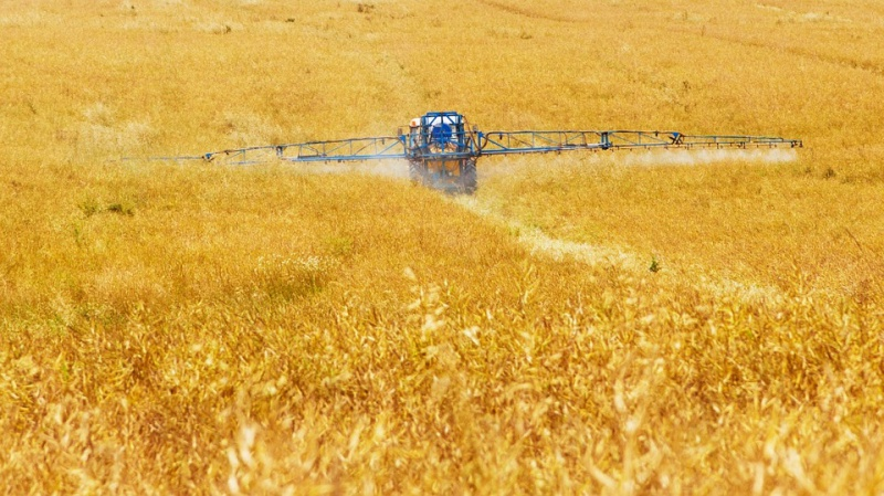 Fusione Monsanto Bayer: pesticidi