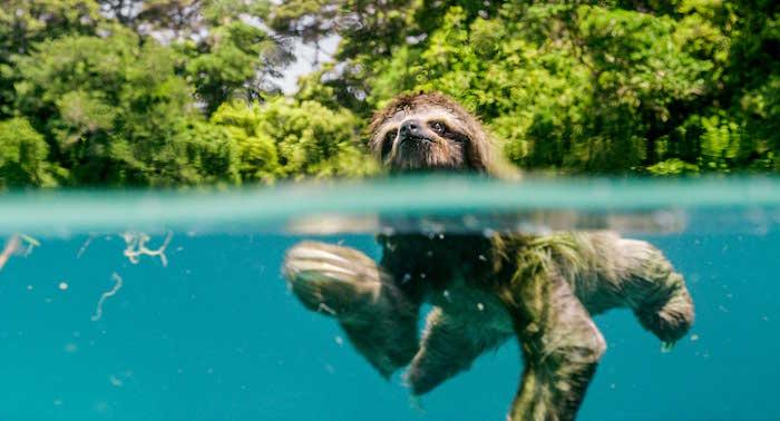 Earth - Un giorno straordinario bradipo
