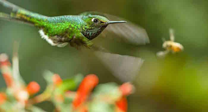 Earth - Un giorno straordinario colibri ape