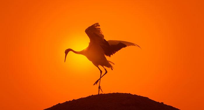 Earth - Un giorno straordinario tramonto