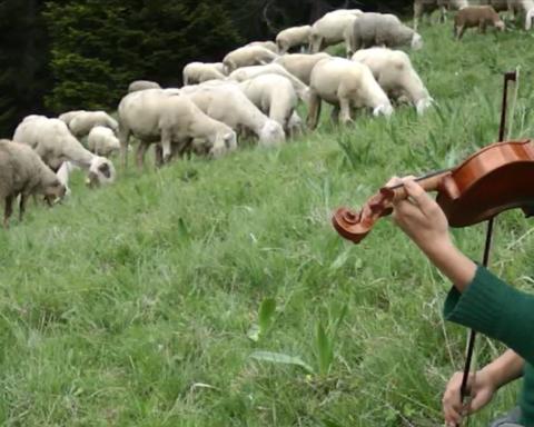 Caterina, la musica, il gregge