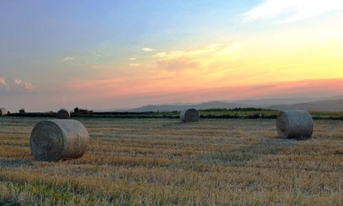 Bando Ismea: per il 2018 sono stati stanziati 70 milioni per linsediamento di giovani imprenditori agricoli.