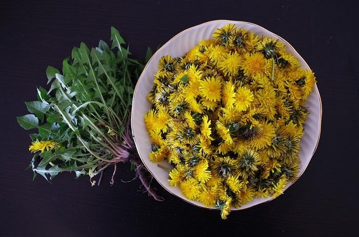 Fiori, foglie e radice di tarassaco possono essere gustati in diverse preparazioni