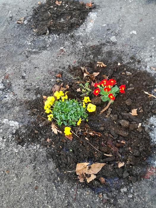 I fiori segnalano le buche e abbelliscono lo spazio urbano - Foto: Montefegatesi Official Page