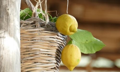 Sentiero dei Limoni: è lantico percorso da Maiori a Minori caratterizzato dai terrazzamenti di limone IGP.