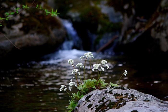 solstizio montagna fiori