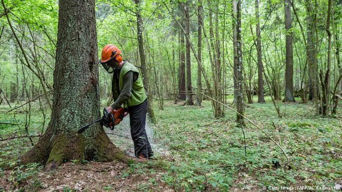 taglialegna nel bosco