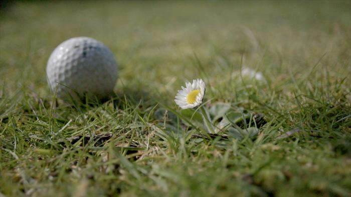GroundWar_fiori