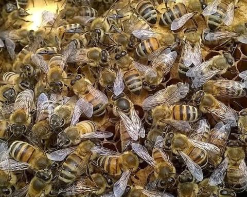 api-silvia-bertazzo