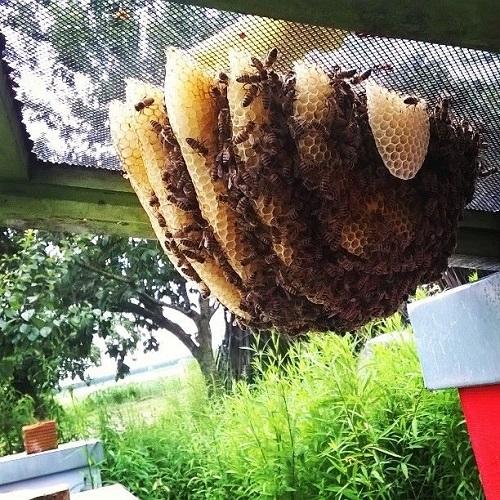 api-silvia-bertazzo-alveare