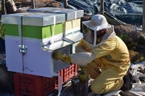 api-silvia-bertazzo-arnie-miele