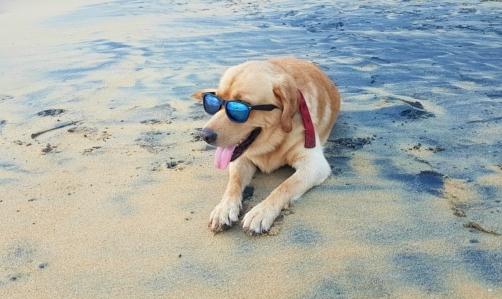 Bau beach: sono ormai numerose anche in Italia le spiagge accessibili ai cani.
