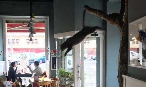 "Locali vegani Roma: Fonte foto: pagina FB ""Romeow Cat Bistrot"""