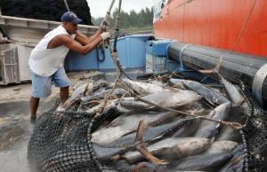 pesca squali