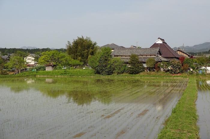 pesticidi risaia giappone