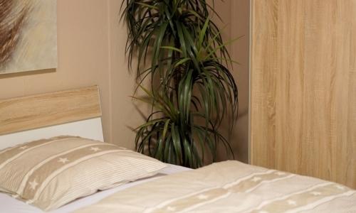 Piante in camera da letto: